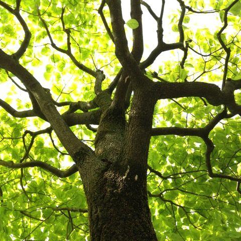 木は下から上に生えている